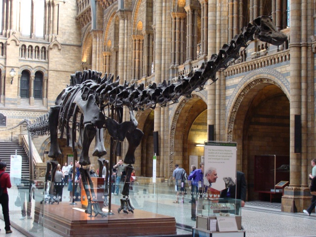 Diplodocus_(replica).001_-_London