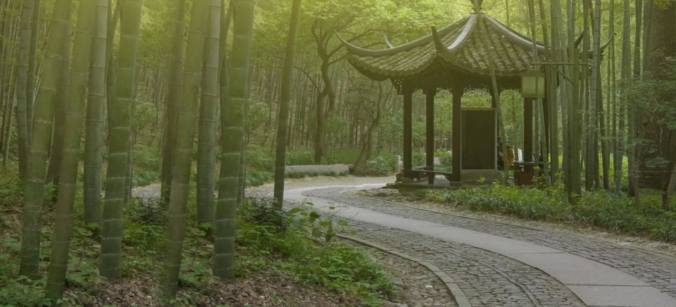 feng shui forest